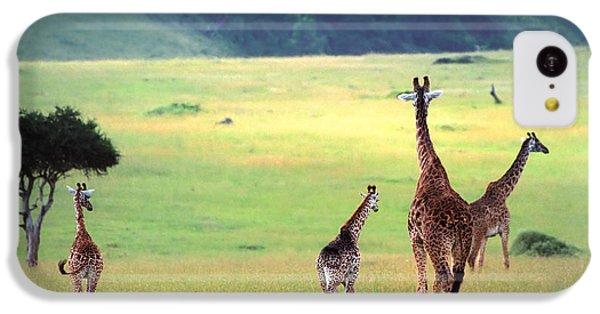 Giraffe IPhone 5c Case by Sebastian Musial