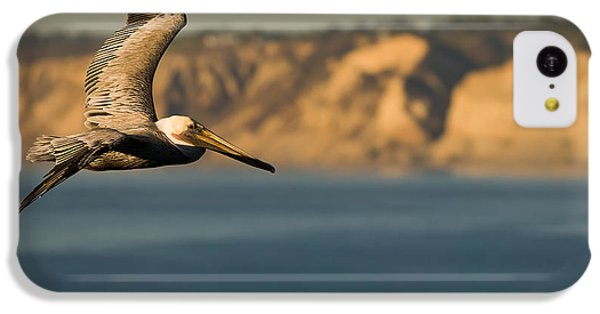 Gliding Pelican IPhone 5c Case by Sebastian Musial