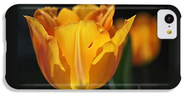 Glowing Tulips IPhone 5c Case by Rona Black