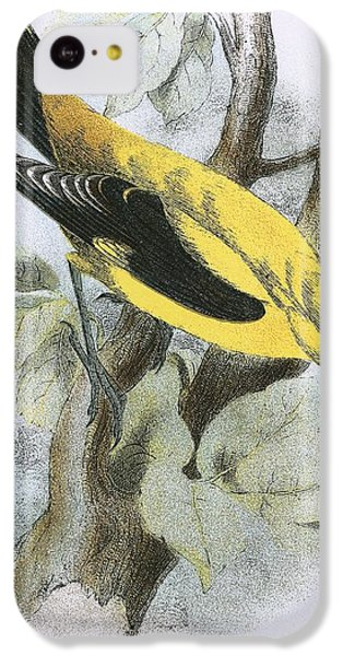 Golden Oriole IPhone 5c Case by English School