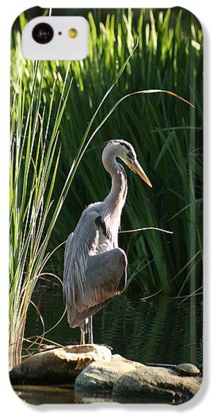 Great Blue Heron IPhone 5c Case by Ellen Henneke