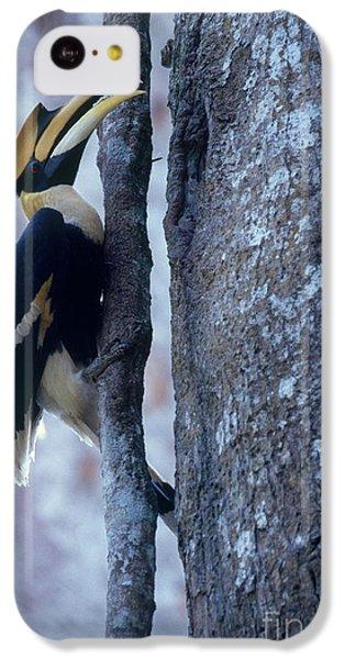 Great Hornbill IPhone 5c Case by Art Wolfe