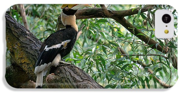 Great Indian Hornbill IPhone 5c Case by Art Wolfe
