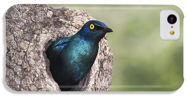 Greater Blue-eared Glossy-starling IPhone 5c Case by Andrew Schoeman