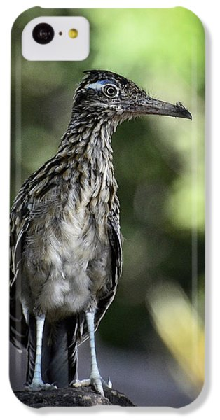Greater Roadrunner  IPhone 5c Case by Saija  Lehtonen