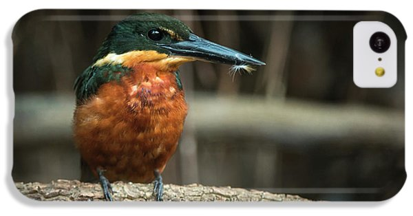 Green And Rufous Kingfisher IPhone 5c Case by Pete Oxford