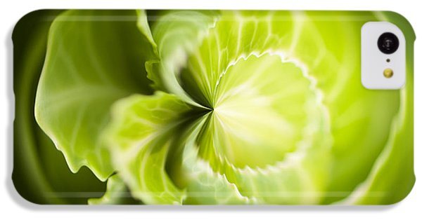 Green Cabbage Orb IPhone 5c Case by Anne Gilbert
