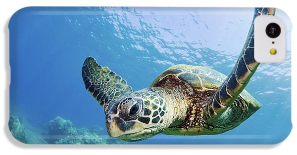 Green Sea Turtle - Maui IPhone 5c Case by M Swiet Productions