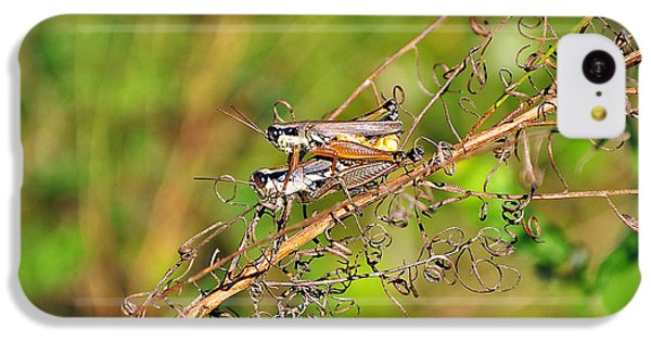 Gregarious Grasshoppers IPhone 5c Case by Al Powell Photography USA