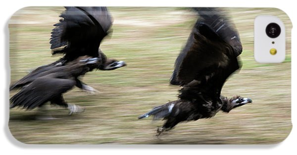 Griffon Vultures Taking Off IPhone 5c Case by Pan Xunbin