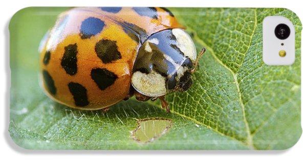Harlequin Ladybird IPhone 5c Case by Heath Mcdonald