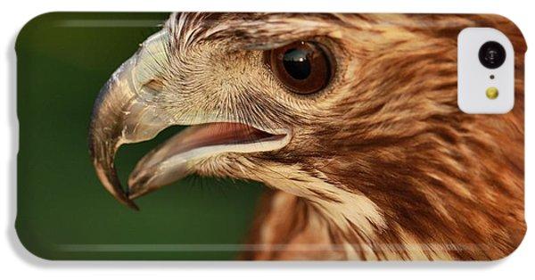 Hawk Eyes IPhone 5c Case by Dan Sproul