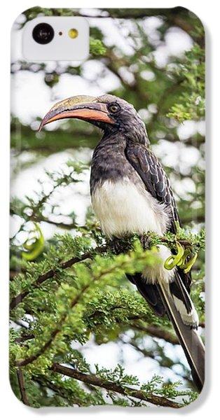Hemprichs's Hornbill (tockus Hemprichii) IPhone 5c Case by Peter J. Raymond