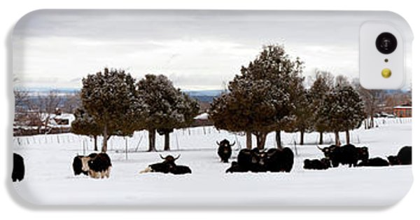 Herd Of Yaks Bos Grunniens On Snow IPhone 5c Case by Panoramic Images