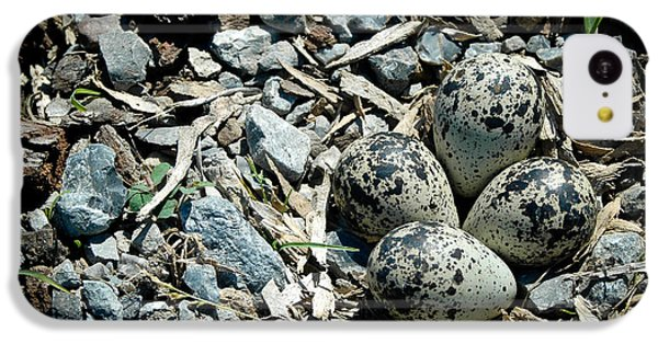 Hidden In Plain Sight IPhone 5c Case by Rhonda Barrett
