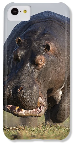 Hippopotamus Bull Charging Botswana IPhone 5c Case by Vincent Grafhorst