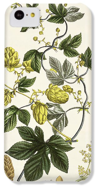 Hop Vine From The Young Landsman IPhone 5c Case by Matthias Trentsensky