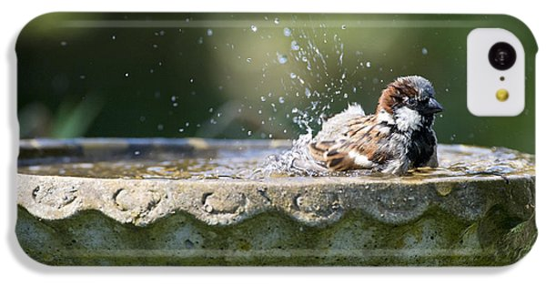 House Sparrow Washing IPhone 5c Case by Tim Gainey