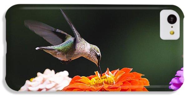 Hummingbird In Flight With Orange Zinnia Flower IPhone 5c Case by Christina Rollo