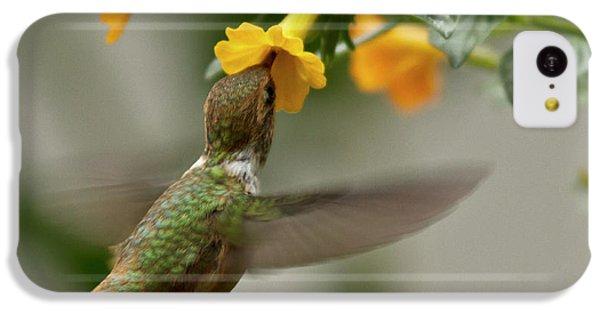 Hummingbird Sips Nectar IPhone 5c Case by Heiko Koehrer-Wagner