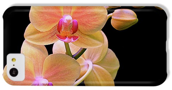 In Bloom IPhone 5c Case by Rona Black