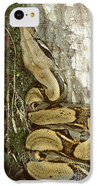 Juvenile Boa Constrictor IPhone 5c Case by Gregory G. Dimijian, M.D.