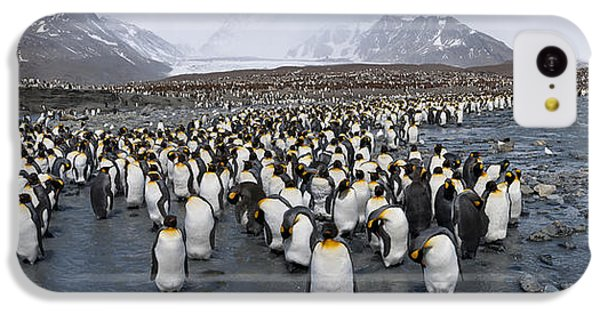 King Penguins Aptenodytes Patagonicus IPhone 5c Case by Panoramic Images