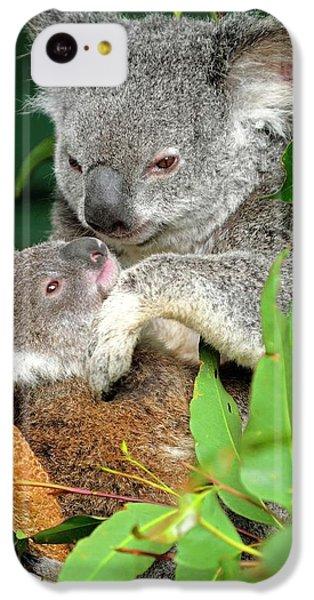 Koalas IPhone 5c Case by Bildagentur-online/mcphoto-schulz