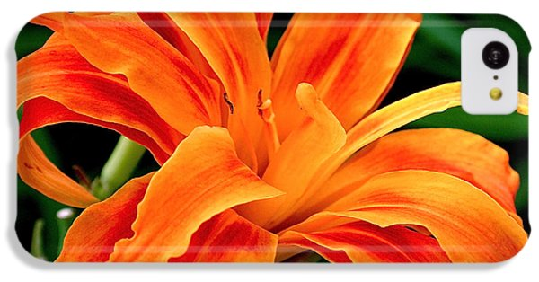 Kwanso Lily IPhone 5c Case by Rona Black