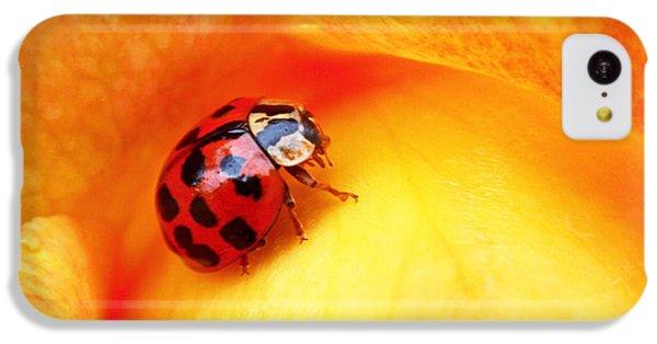 Ladybug IPhone 5c Case by Rona Black