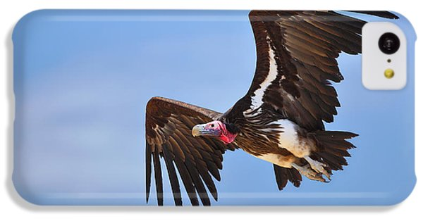 Lappetfaced Vulture IPhone 5c Case by Johan Swanepoel
