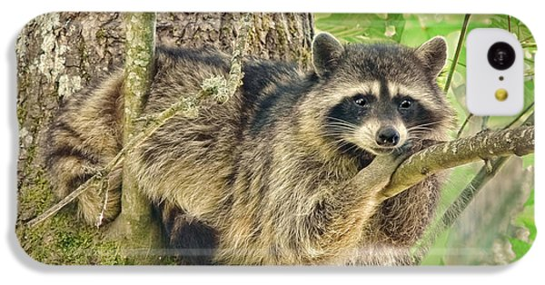 Lazy Day Raccoon IPhone 5c Case by Jennie Marie Schell
