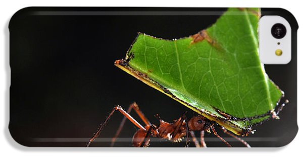 Leafcutter Ant IPhone 5c Case by Francesco Tomasinelli