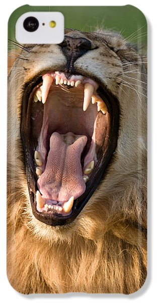 Lion IPhone 5c Case by Johan Swanepoel