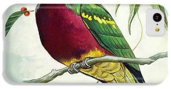 Magnificent Fruit Pigeon IPhone 5c Case by Bert Illoss