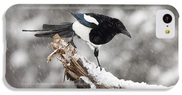 Magpie Out On A Branch IPhone 5c Case by Tim Grams
