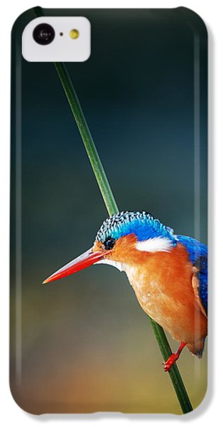 Malachite Kingfisher IPhone 5c Case by Johan Swanepoel