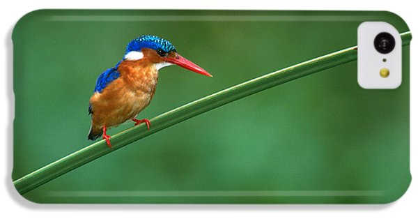 Malachite Kingfisher Tanzania Africa IPhone 5c Case by Panoramic Images