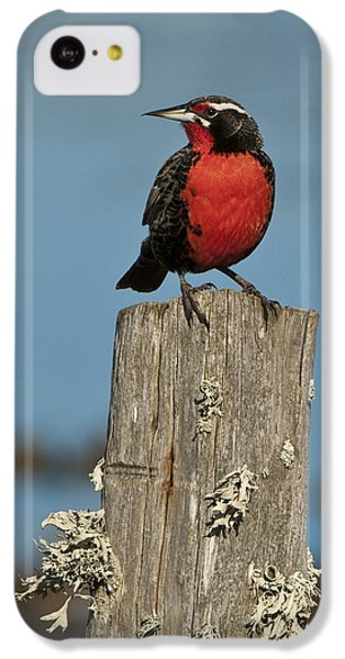Male Long-tailed Meadowlark On Fencepost IPhone 5c Case by John Shaw