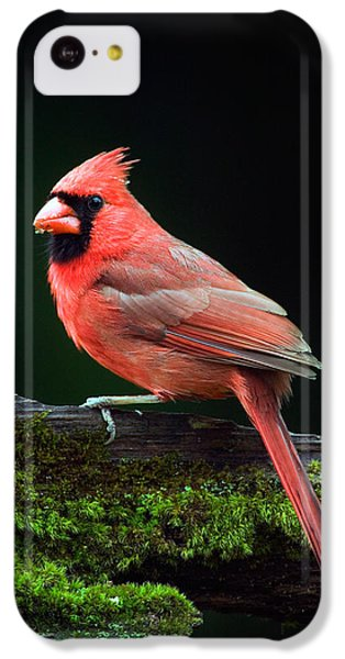 Male Northern Cardinal Cardinalis IPhone 5c Case by Panoramic Images