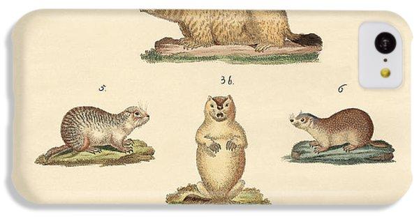 Marmots And Moles IPhone 5c Case by Splendid Art Prints
