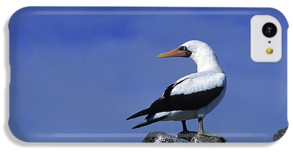 Masked Booby Bird IPhone 5c Case by Thomas Wiewandt