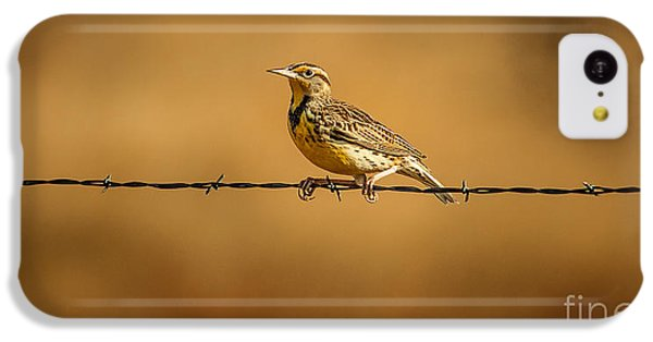 Meadowlark And Barbed Wire IPhone 5c Case by Robert Frederick