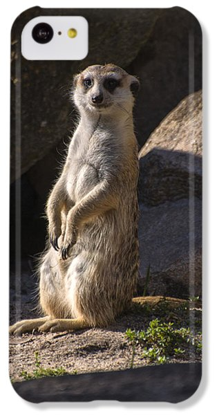Meerkat Looking Forward IPhone 5c Case by Chris Flees