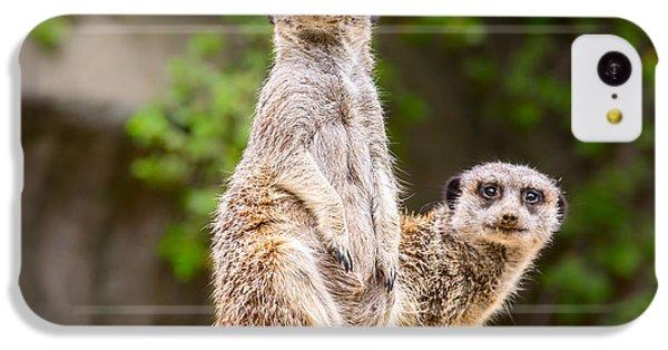 Meerkat Pair IPhone 5c Case by Jamie Pham