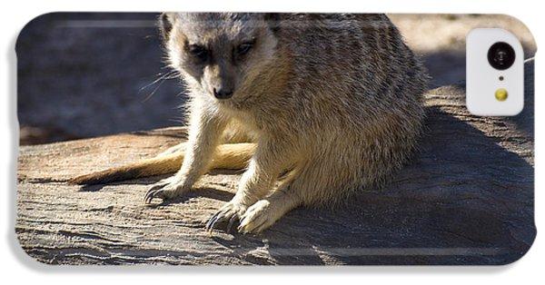 Meerkat Resting On A Rock IPhone 5c Case by Chris Flees