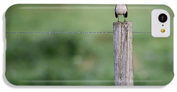 Minimalism Mockingbird IPhone 5c Case by Bill Wakeley