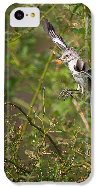 Mockingbird IPhone 5c Case by Bill Wakeley