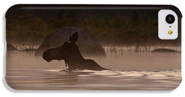 Moose Swim IPhone 5c Case by Brent L Ander