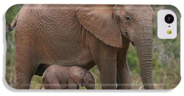 Mother And Calf IPhone 5c Case by Bruce J Robinson